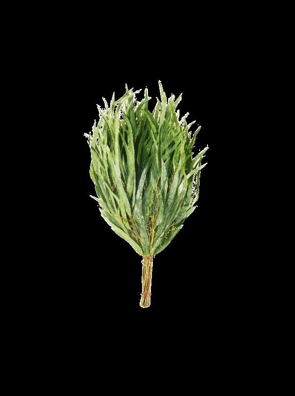 Witki eukaliptusowe Bassau